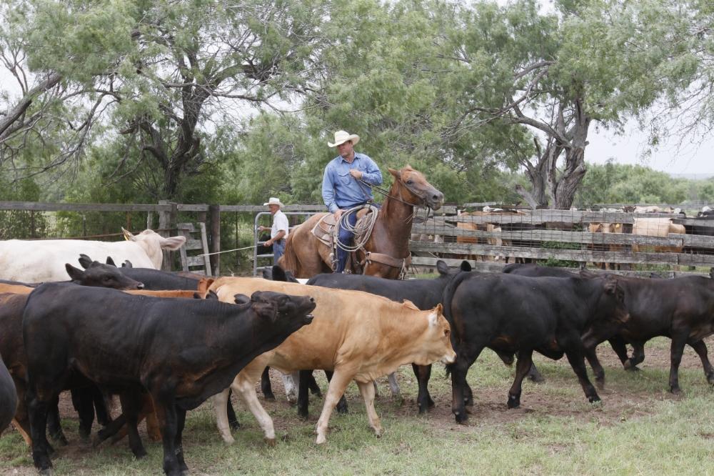 130708_Cowboys